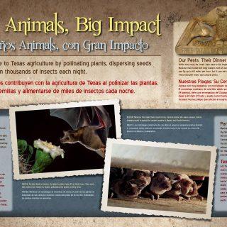 Casa Blanca Lake State Park Bats Panel