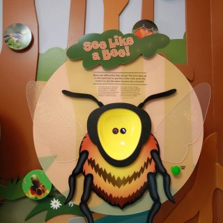 See Like A Bee
