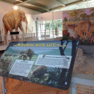 Prehistoric Life rail reader