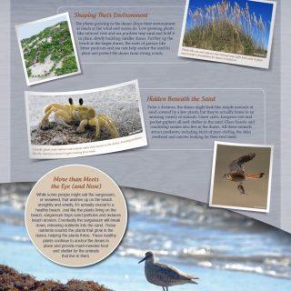 Mustang Island interpretive panel - Closer Look
