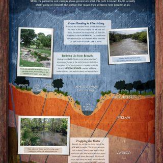 Palmetto State Park - Swamp interpretive